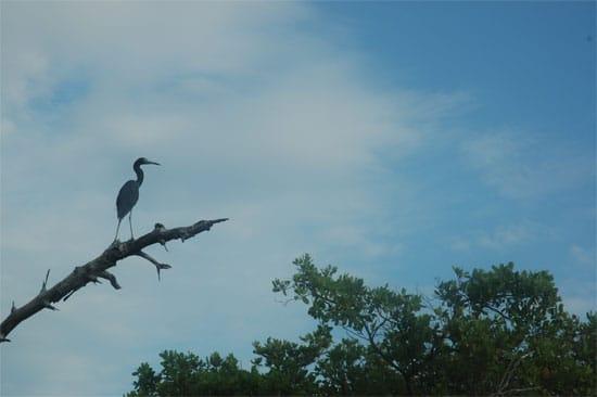 Un milieu riche en biodiversité. (Photo L.D.)