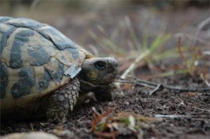 Sauvegarde des tortues dans le VAR