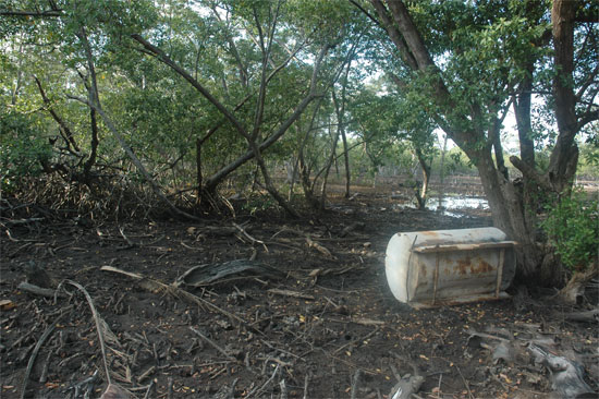 Exemple de destruction de la mangrove pour la construction d'une marina sur l'île d'Utila. Photo L.D.