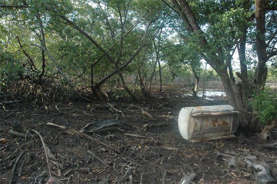 Exemple de destruction de la mangrove pour la construction d'une marina sur l'île d'Utila. Photo L.D.