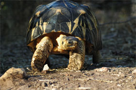 Bénévolat au village des tortues à Madagascar