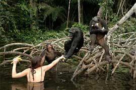 Protection des primates avec HELP Congo