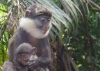 Restauration de l'habitat des primates dans la vallée du Mono, avec Cybelle Planète