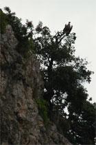 Protection du vautour fauve en Israël