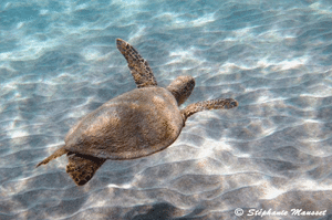 Photos de tortue marine