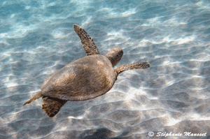 Protection des tortues marines en Grèce
