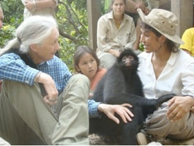 Jane Goodall lors d'une visite au refuge. (Photo Inti Wara Yassi)