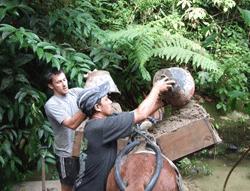 Equateur : volontaire au refuge Merazonia dans la forêt amazonienne