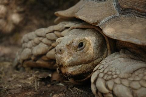 Tour du monde d'une éco-volontaire : le village des tortues à Gonfaron (4/7)