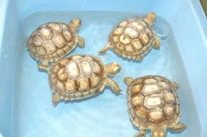 Les tortues mises en avant sur une aire d'autoroute