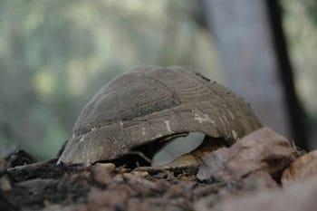 Tour du monde d'une éco-volontaire : le village des tortues à Gonfaron (6/7)