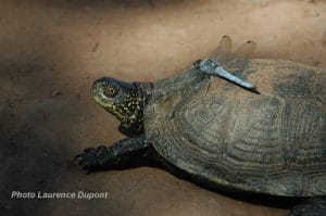 tortue insecte