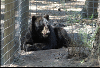 Le sanctuaire prêt pour accueillir un ours en danger