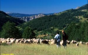 Bénévole aux côtés  des bergers avec FERUS