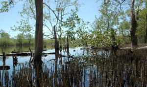 Tour du monde d'une écovolontaire : la maison aux iguanes au Honduras (8)