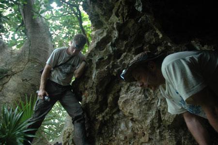 Grottre chauve-souris à Utila
