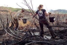 volontaire WWF
