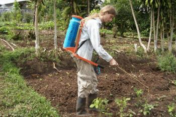 Volontaire à la ferme biologique Flor de Paraiso au Costa Rica