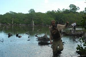 Mangrove Utila