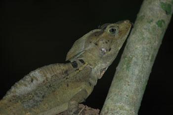 Tour du monde d'une écovolontaire : la maison aux iguanes au Honduras (13)