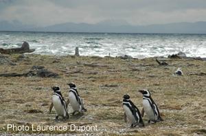 Chili : la traversée du mythe patagon (7)