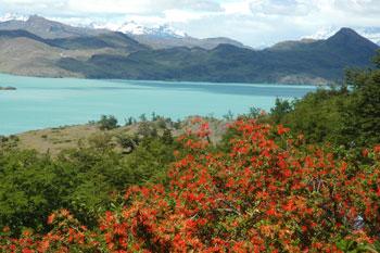 Bénévole au parc Torres del Paine en Patagonie chilienne