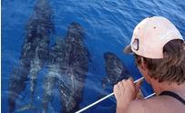 Cybelle Planète : mission cétacés en mer Méditerranée