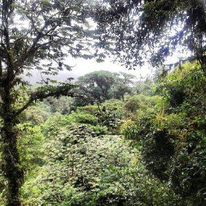 Costa Rica ecovolontariat