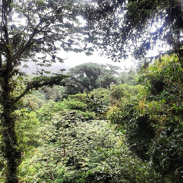 Au Costa Rica avec Volontaire pour la nature