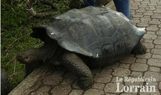 Revue de presse : témoignage de Roger écovolontaire auxGalapagos