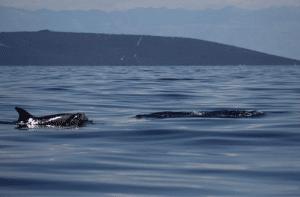 bénévolat-dauphin