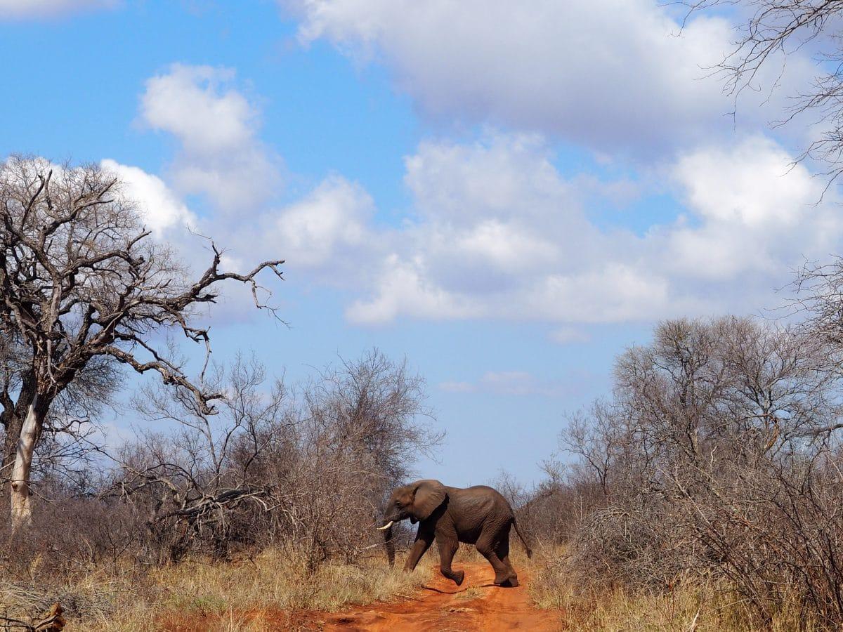 ecovolontariat afrique du sud
