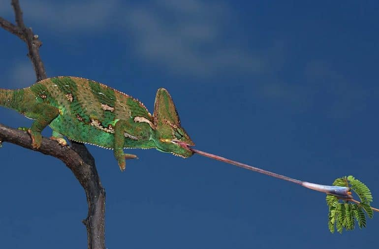 Mission reptiles