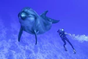 Grands dauphins