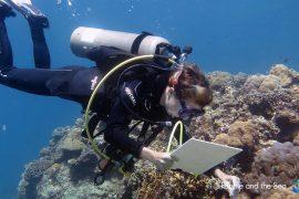 eco volontariat plongée