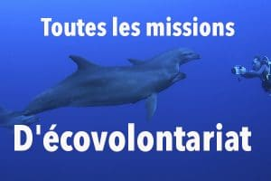 Mission ecovolontariat