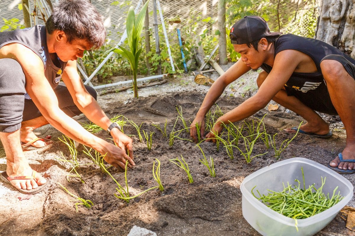permaculture Philippines
