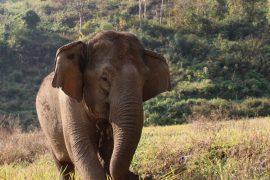 éléphants-ecovolontariat