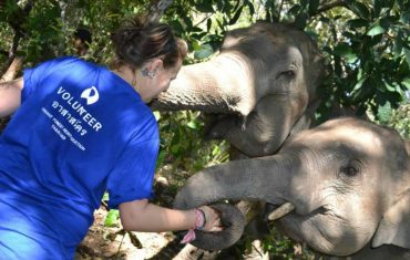 Marine est partie 4 semaines sur la mission des éléphants en Thaïlande avec Freepackers, dans le cadre de son stage conventionné. En immersion auprès des communautés locales, elle raconte l'expérience d'une vie.