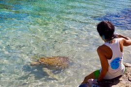 Clinique tortue moorea