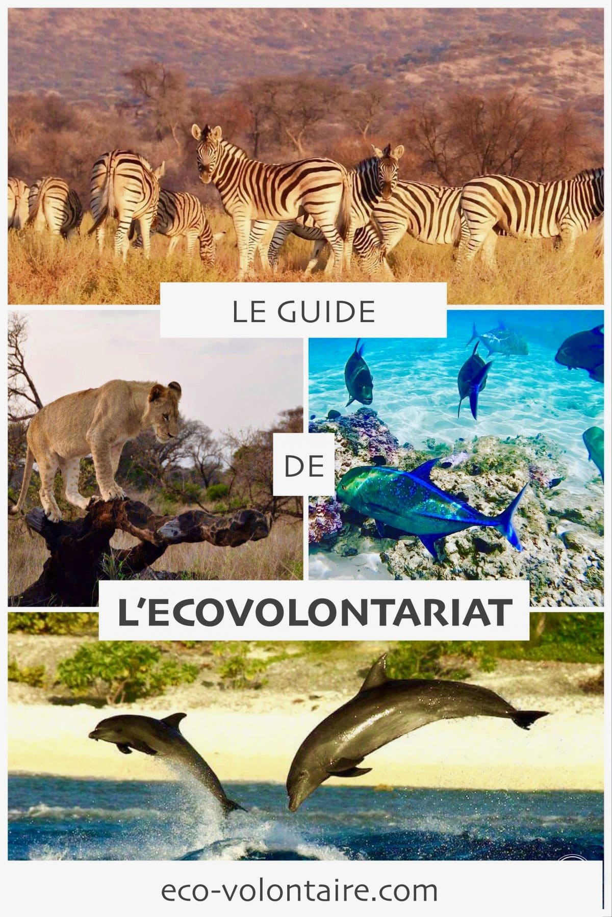 guide ecovolontariat