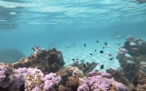 moorea fonds marins