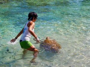 clinique des tortues marines