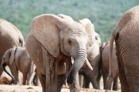 kenya éléphants