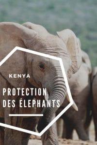 protection-elephants-kenya