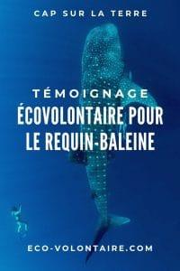 volontaire requin baleine