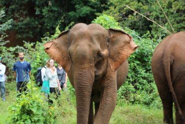 ecovolontariat éléphant