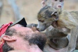 Volunteer-babouin