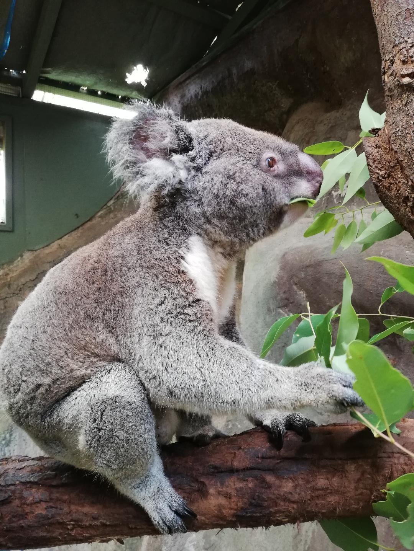 sauver animaux australie