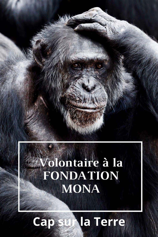 fondation mona